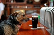Guinness, Visa debit cards, and Michelle Mulherin: The week in numbers