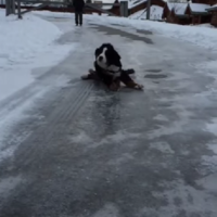 This dog magnificently slipping on ice is all of us