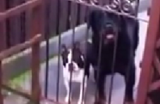 Man says 'hello' to dog, dog says 'hello' back