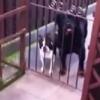 Man says 'hello' to dog, dog says 'hello' back