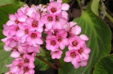 Plant life: Gerry Daly tells you how get the most out of your garden