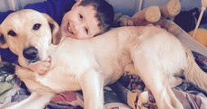 Autistic boy reunited with stolen dog after mother's viral campaign