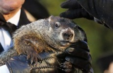 Six more weeks of winter? Groundhogs differ on forecasts