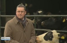 A cow tried to eat George Lee's coat on tonight's Six One News