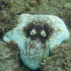 Diver films octopus' amazing camouflage skills, and it's bloody terrifying
