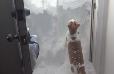 Cat tries to dig its way out of snowed-in house, fails miserably