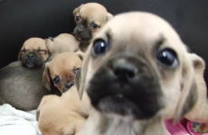 This video of the 116 puppies rescued at Dublin Port will make your day