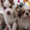 This adorable video of the 116 puppies rescued at Dublin Port is essential viewing