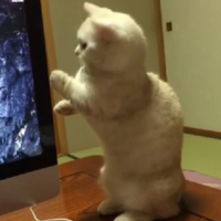 Just a kitten, getting mightily spooked by a DVD