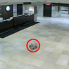 This little dog walked 20 blocks to visit her owner in hospital