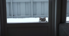 Cat hassles owners non-stop to come out and play in the snow