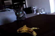 Who knew cats and bananas were such mortal enemies?