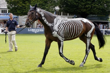 'Horses Inside Out', an organisation which gives insight into how the horse works, gives a demonstration at the Dublin Horse Show in the RDS