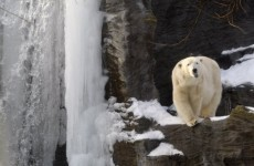 Teenage victim of Norway polar bear attack named