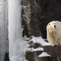 Teenage victim of Norway polar bear attack named