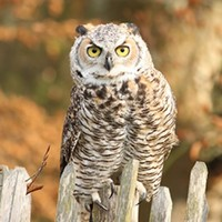 An owl bar is opening in London, and people are VERY excited about it