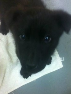 The Gardaí are using this incredibly cute puppy to try and win us over (again) on Twitter