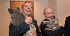 Australia has killed nearly 700 koalas - but Russia hopes the 'Putin koala' was spared