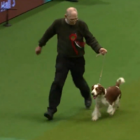 It's happened. A dog has taken a shite mid-competition at Crufts