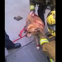 Watch this fire crew get creative when rescuing a dog stuck between two walls