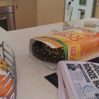 A man found a huge python in his box of cornflakes
