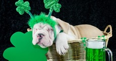 Open Thread: How do we feel about a 'sober' St Patrick's Day?