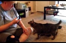 Here's what happens when you smack talk a cat, in cat speak