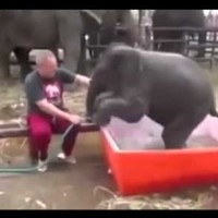 This baby elephant taking a bath is as gracious as you after a few drinks