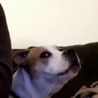 This guy discovered that his dog inexplicably hates Playstation sounds