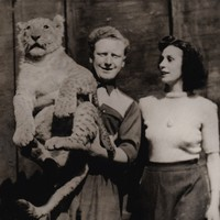 The day a lioness terrorised Dublin: The story of the 1951 Fairview lion escape
