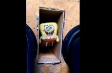 This is what happens when you place a stuffed Spongebob toy on a speaker