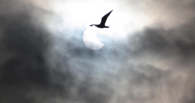 A photographer captured the exact moment a goose flew past the eclipse