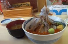 Here is what happens when you pour soy sauce over a dead cuttlefish