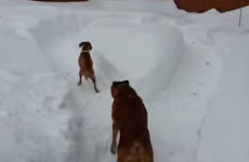 Lazy dog doesn't want to play, tricks puppy into chasing itself around in circles
