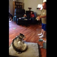 Watch this guy have an actual blazing row with his dog over stolen food