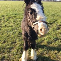 Dublin councils have seized 118 horses on public lands this year