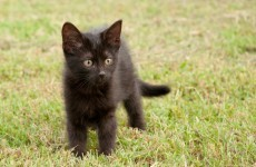 Curious kitten starts house fire, then alerts owners to the blaze