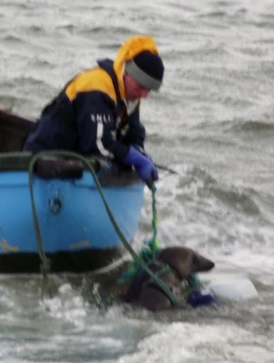 Pics: Lifeboat volunteers rescue 'tired and stressed' seal trapped in fishing gear