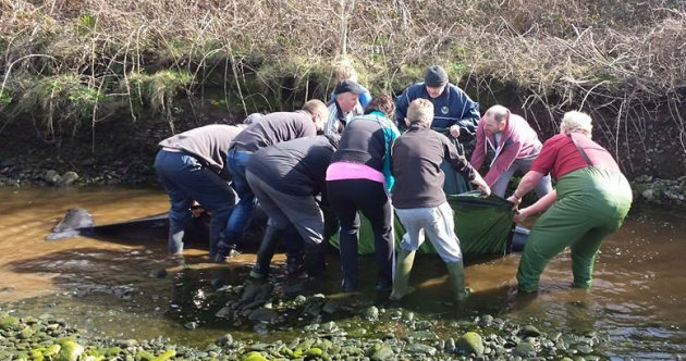 Pictures: Kenmare locals rescue whale trapped two miles inland