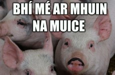 11 things we all said in our Irish oral and what we actually meant