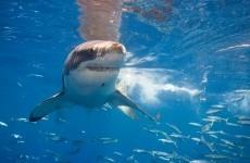 Boy (13) dies after losing limbs in horrific shark attack
