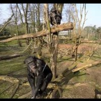 Don't fly your drone near chimps, or bad things will happen