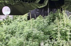 Trafficked woman was locked into cannabis growhouse from the outside