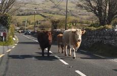9 driving problems every Irish motorist will understand