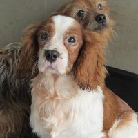 'Appalling and horrific' puppy farm with dead animals on site closed down