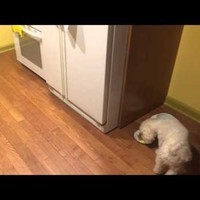 Stray dog is finally adopted, adorably refuses to eat alone ever again