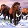 Baby woolly mammoth found in Russia's Arctic