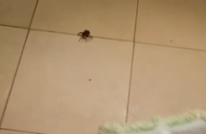 A man tried to squash a spider, but the spider had one last trick up its sleeve