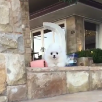 This video of a dog completely failing at jumping is 15 seconds of pure joy