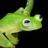 Yep, this fella looks exactly like Kermit the Frog